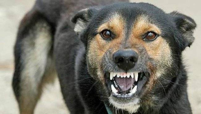 как передается бешенство у собак к собаке